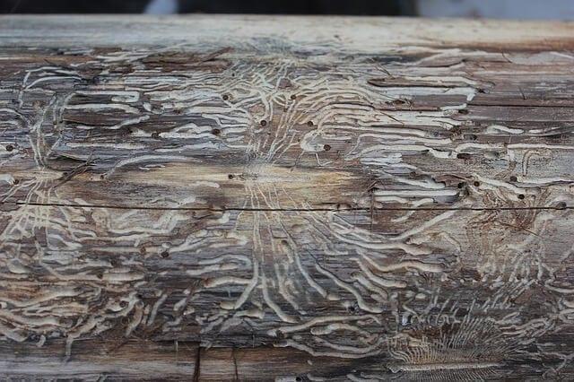 cervotoc-drevo-struktura-drevokazny-hmyz