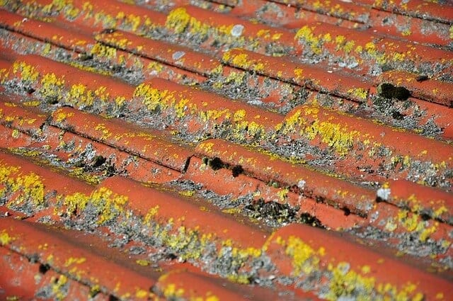 Huby na streche