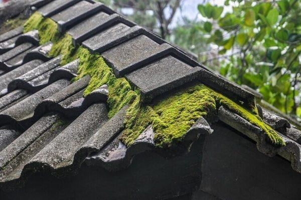 Mach na streche - je to problém, či nie?