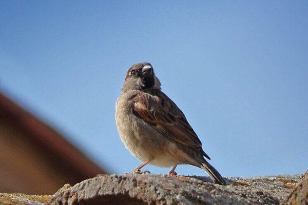 Vtáci na streche - čo by ste mali vedieť