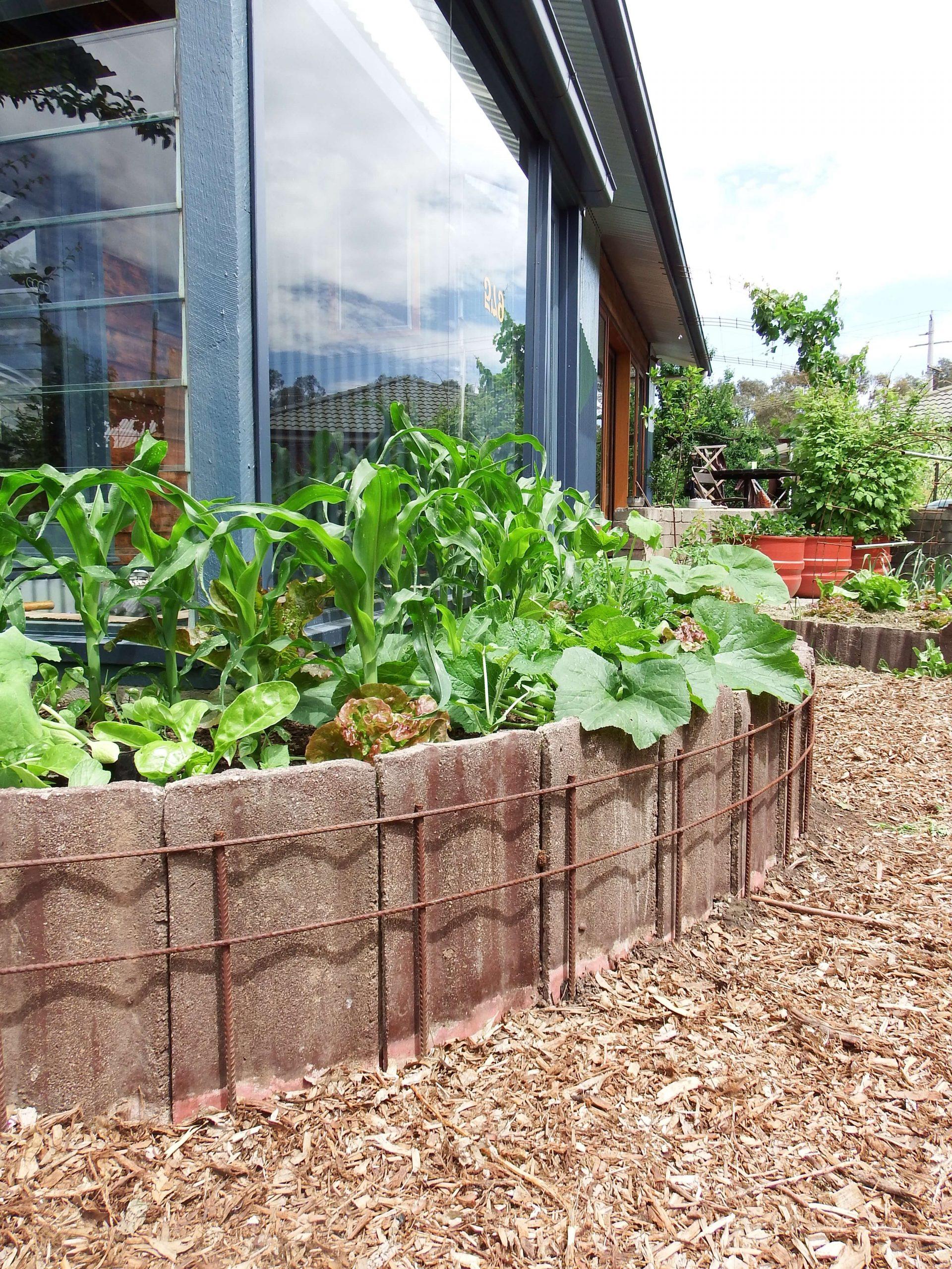 vyvýšený záhon zo škridly v záhrade