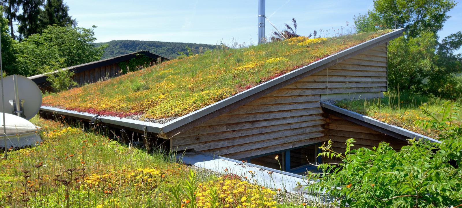 Čo zasadiť na zelenú strechu? Podrobný sprievodca rastlinami