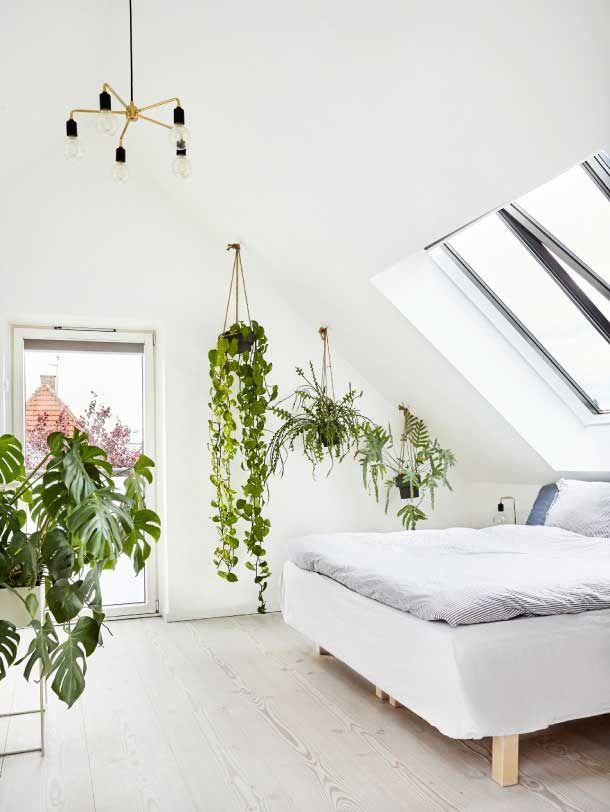rastliny-inspiracia-interier-podkrovie