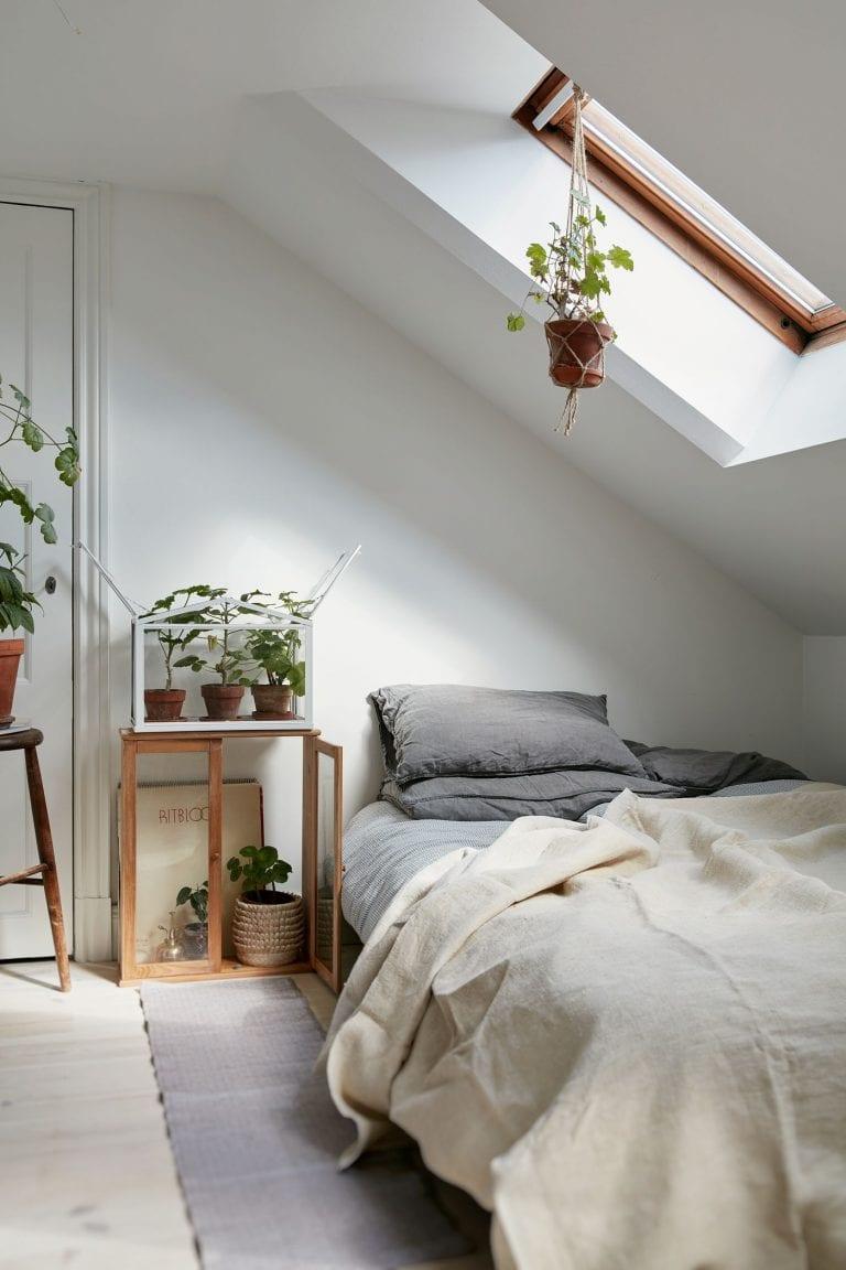 rastliny-zelen-podkrovie