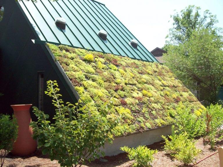 zelena vegetačná strecha